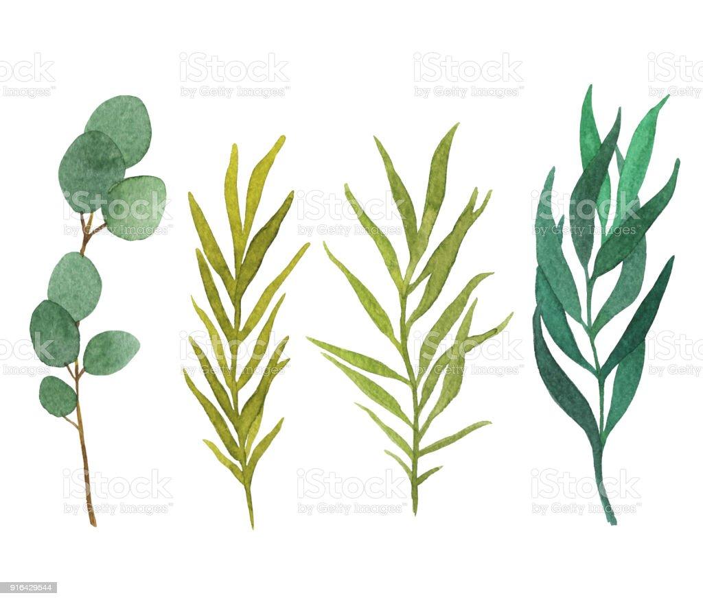 白い背景に分離された水彩画の葉を入り植物イラスト お祝いのベクター