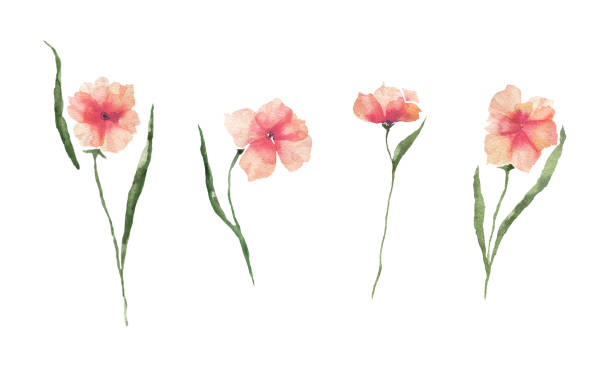 Set with watercolor orange flowers on a white background. vector art illustration
