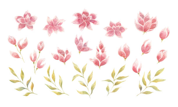 Set with watercolor pink flowers with buds and leaves vector art illustration