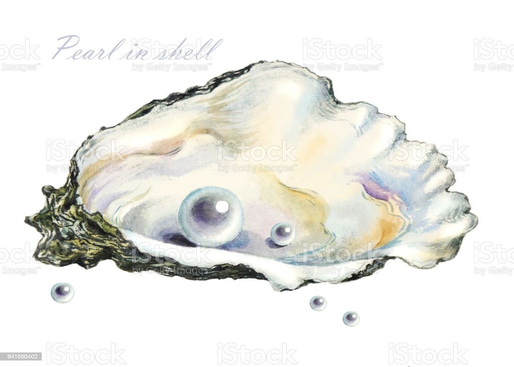 Several Of The Pearls In The Pearl Shell Stock ...