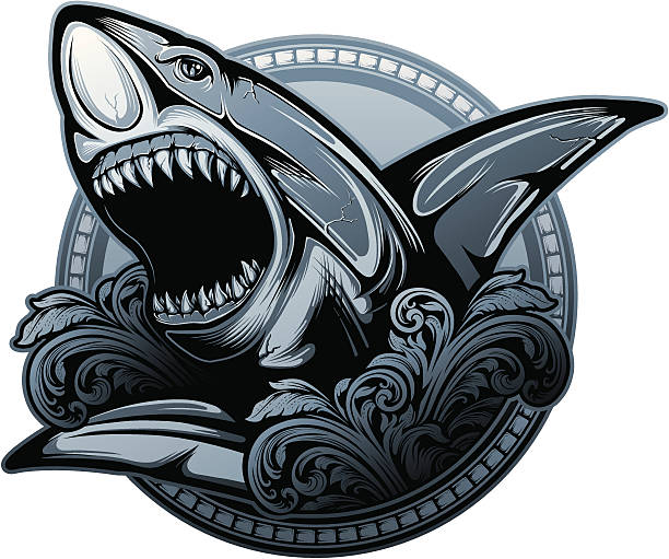 Shark Stylized illustration of a menacing looking shark. Hi-res jpeg included. great white shark stock illustrations