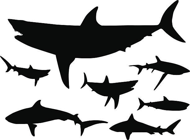 bildbanksillustrationer, clip art samt tecknat material och ikoner med sharks in the water silhouette - bildteknik