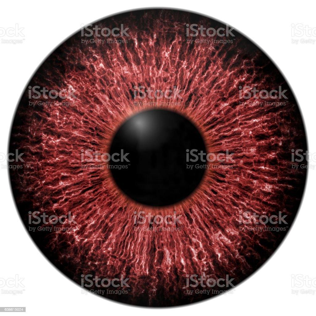 Sharp Attractive Deep Eye Texture D Stock Vector Art - 24 detailed close ups of animal eyes