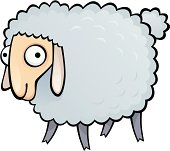 Funny sheep on a white background