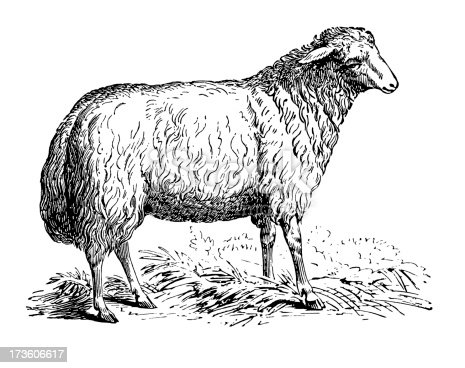 Old engraving of a sheep. Very high XXXL resolution after a detailed scan at 600 dpi. Click to see more images in the lightbox links below: