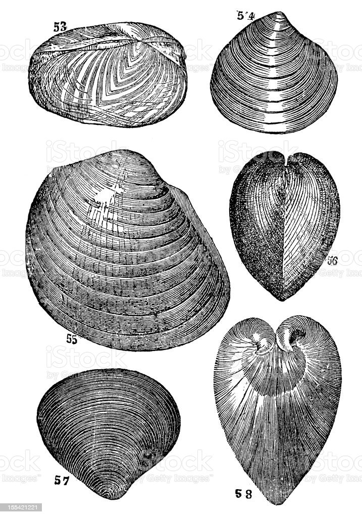 Shell and fossils collection royalty-free stock vector art