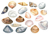 Clip Art set with colorful shells on a white background . Cute stock\n illustration. Hand painted in watercolor