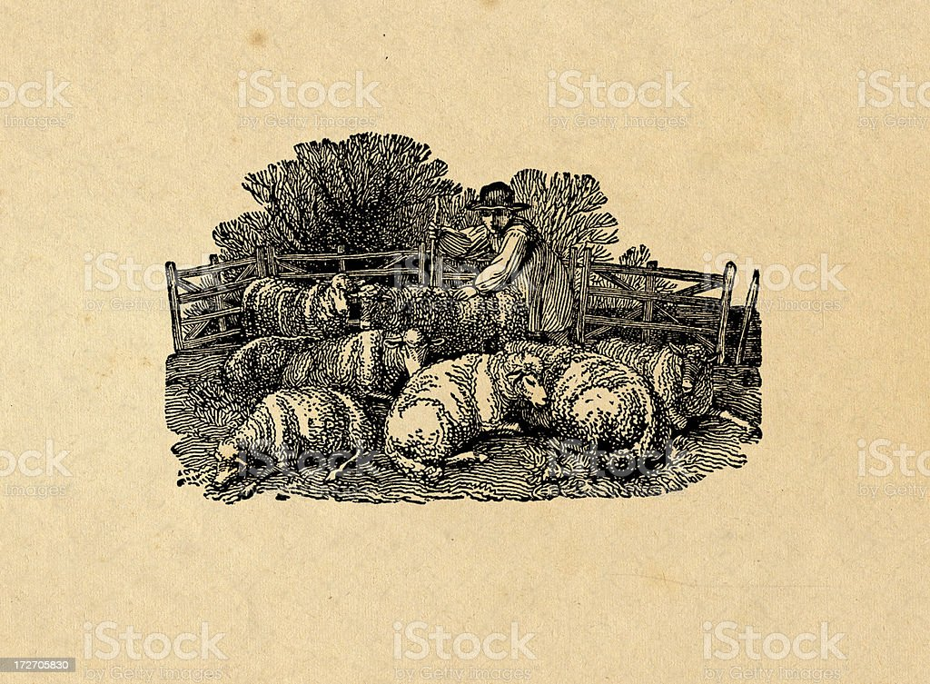 Sheppard with sheeps royalty-free sheppard with sheeps stock vector art & more images of agriculture