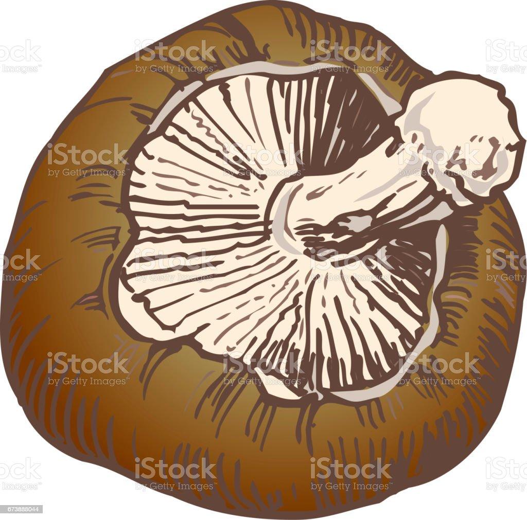 Champignon shitake champignon shitake – cliparts vectoriels et plus d'images de aliment libre de droits