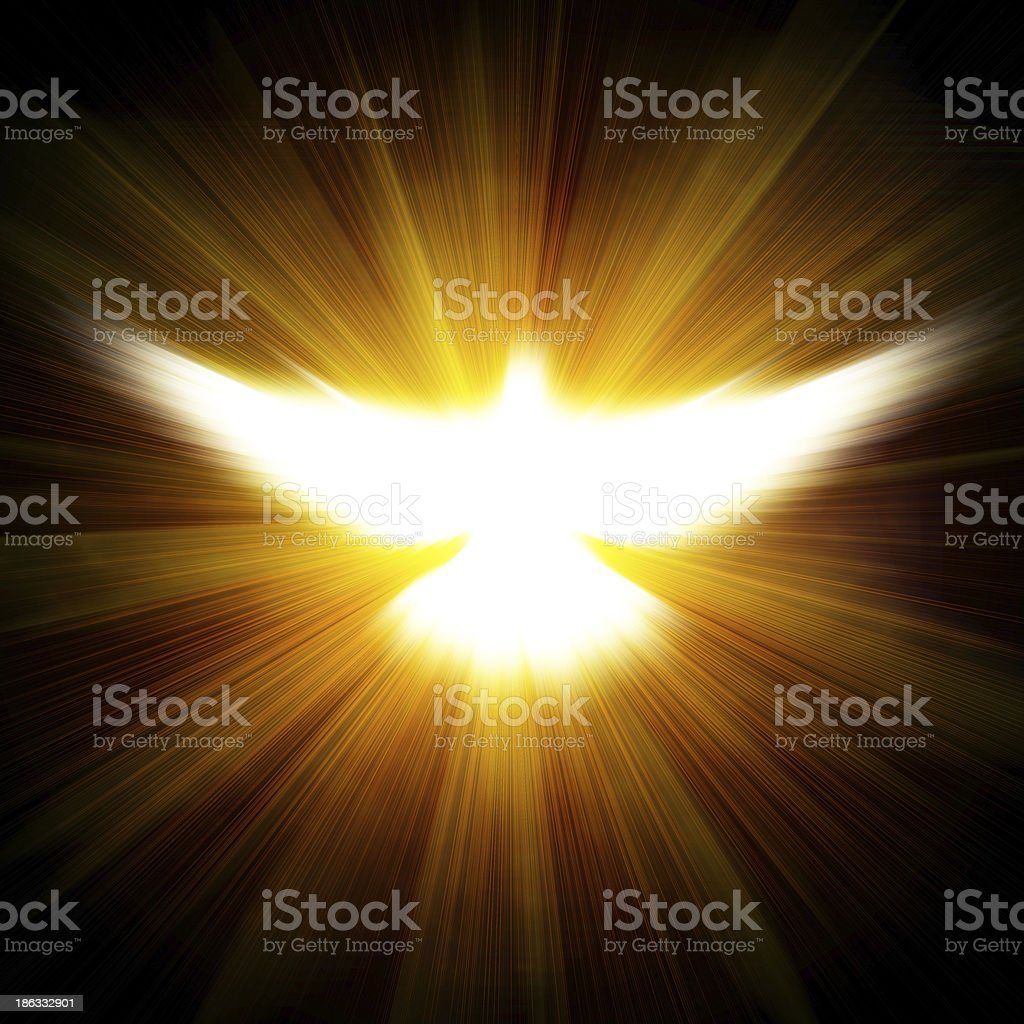 shining dove with rays on a dark vector art illustration