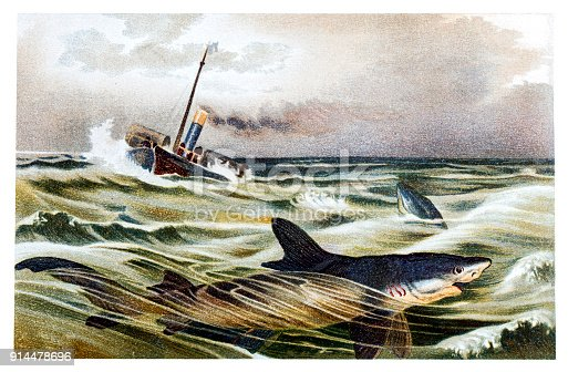 illustration of a shipwreck with blue shark (Prionace glauca)