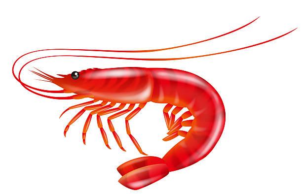 Royalty Free Jumbo Shrimp Clip Art, Vector Images ...