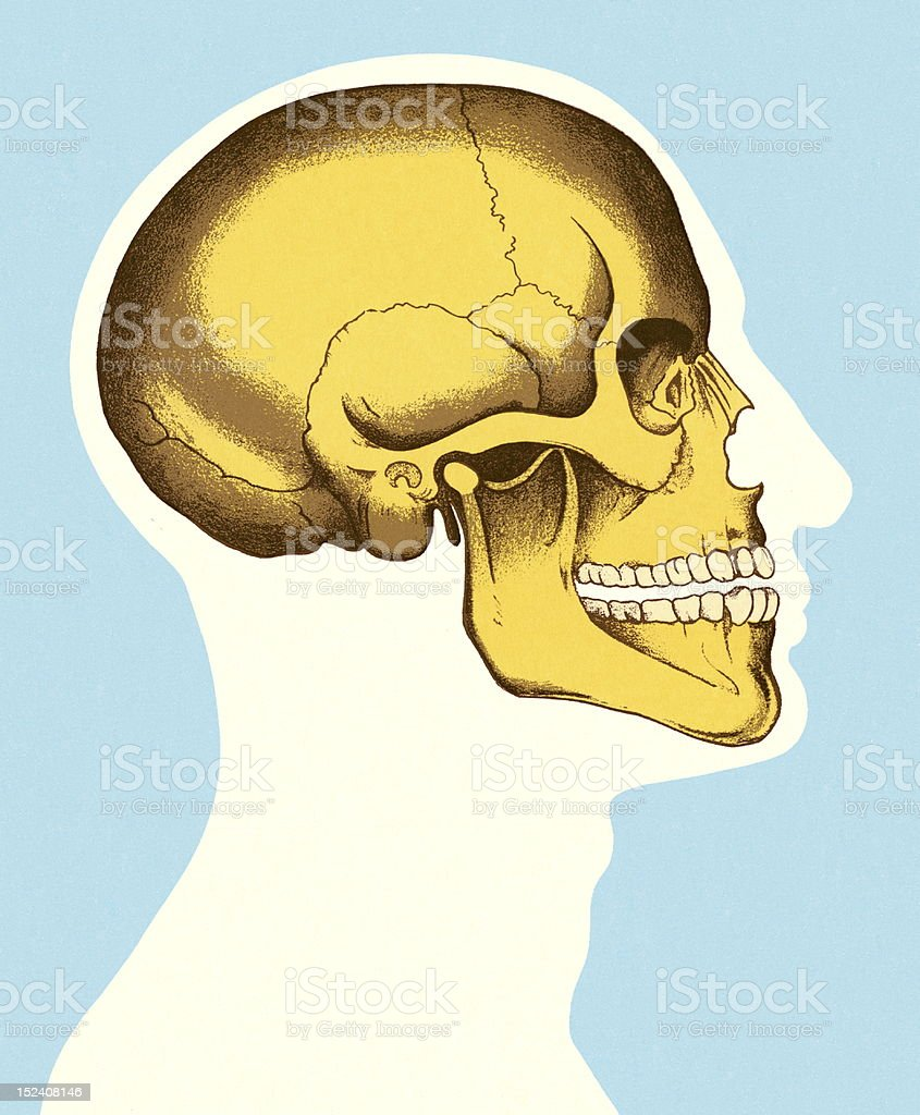 Sideview of Head and Skull royalty-free stock vector art