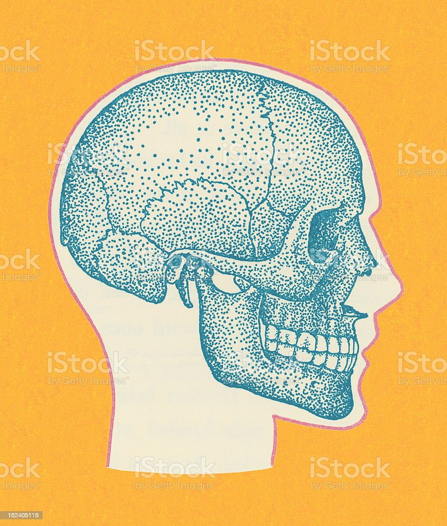 Sideview of Skull royalty-free stock vector art
