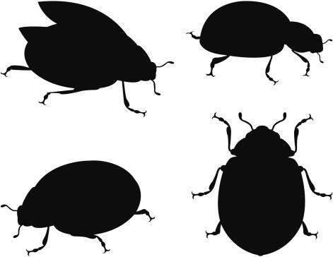 Silhouette ladybug
