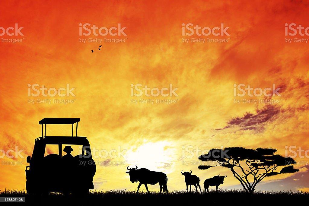 safari in Jeep - illustrazione arte vettoriale