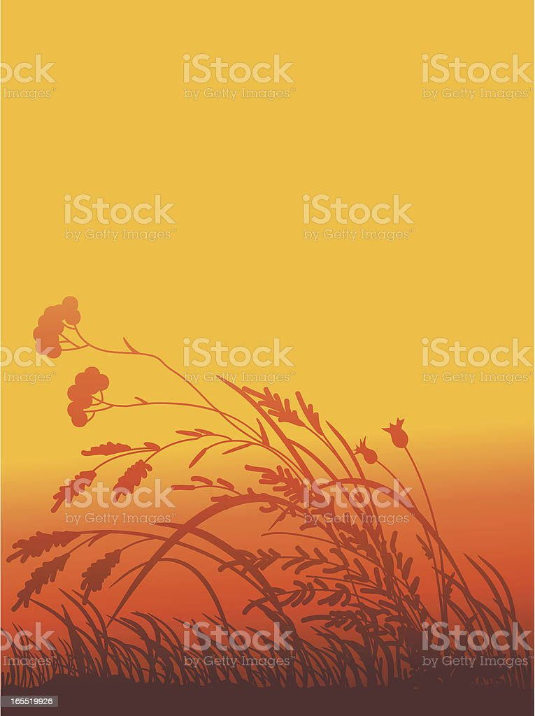 Silhouettes of a grass vector art illustration
