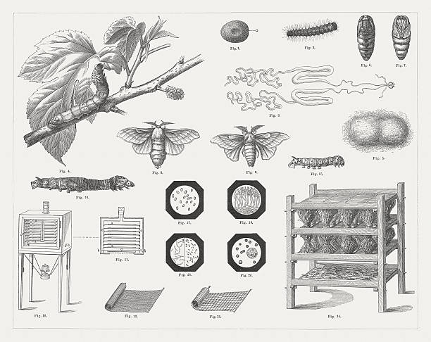 stockillustraties, clipart, cartoons en iconen met silk culture, wood engravings, published in 1878 - zijdeworm