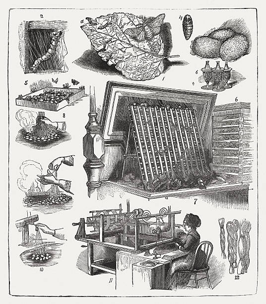 stockillustraties, clipart, cartoons en iconen met silk production, wood engraving, published in 1877 - zijdeworm
