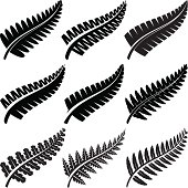 Various ferns iconic to New Zealand.
