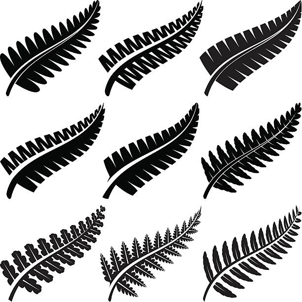 Silver Ferns Various ferns iconic to New Zealand. fern stock illustrations