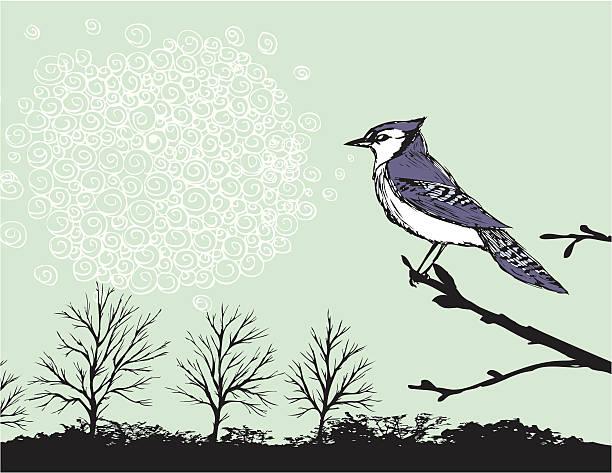 Singing Bluejay vector art illustration