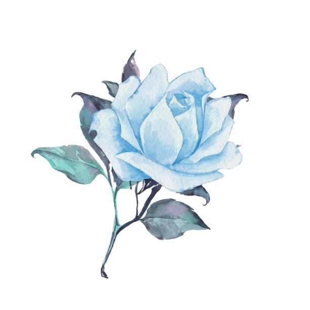 すべてのイラスト画像 ベスト50 かっこいい 青い 薔薇 イラスト