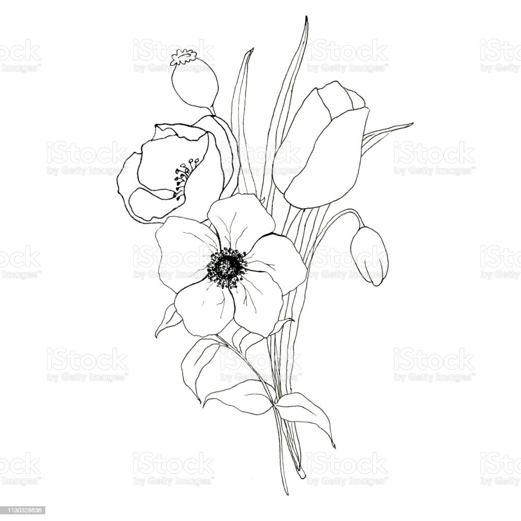 Sketch Greenery And Anemone Bouquet Hand Painted Flowers And Berries With Eucalyptus Leaves And Branch Isolated On White Background For Design Print Or Fabric Stock Illustration Download Image Now Istock