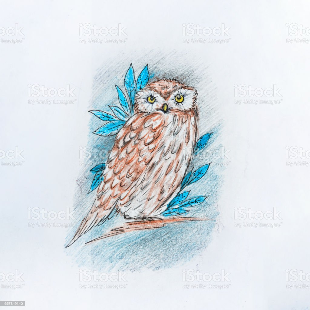 Sketch in the night owl on white background. vector art illustration