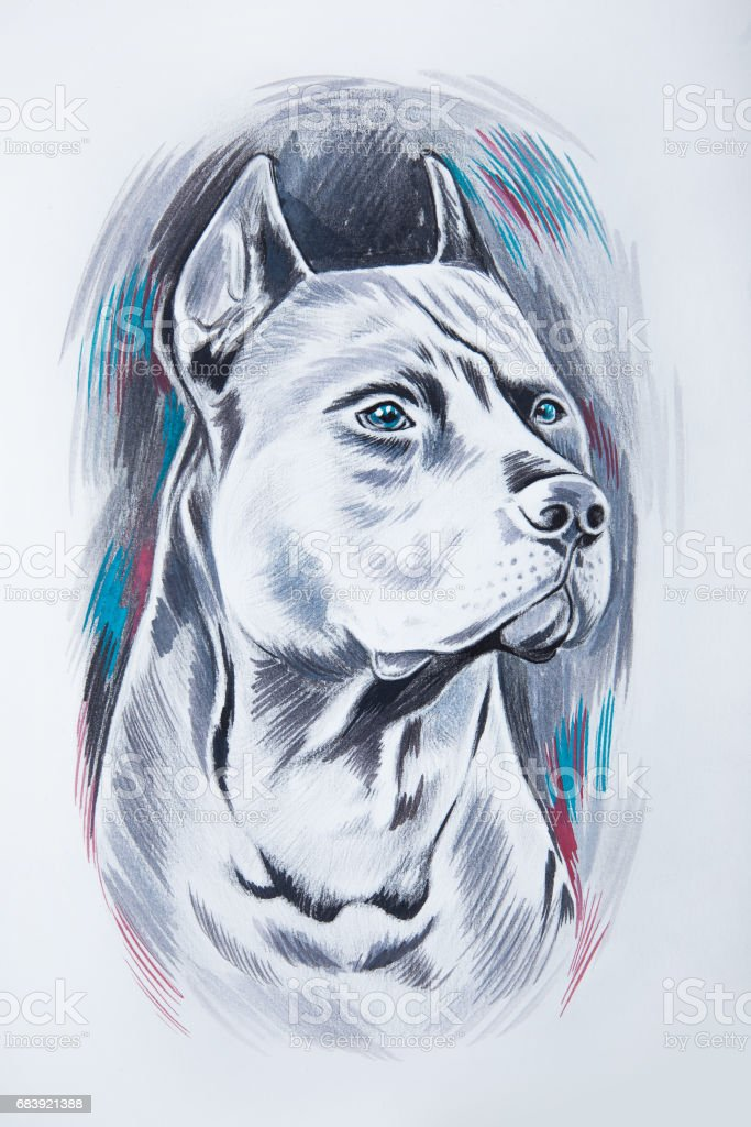 A sketch of a beautiful thoroughbred dog on a white background. vector art illustration