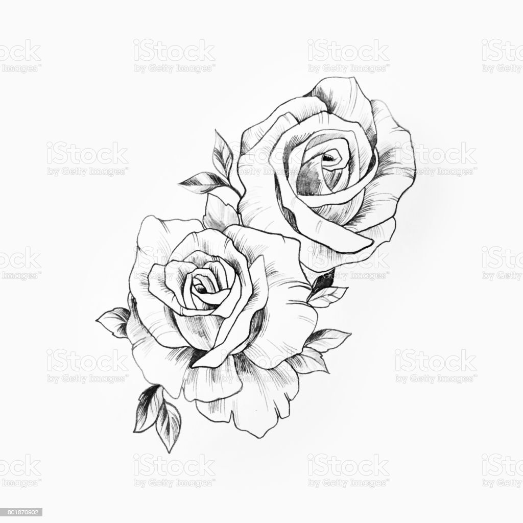 It is a graphic of Massif Beautiful Rose Drawing