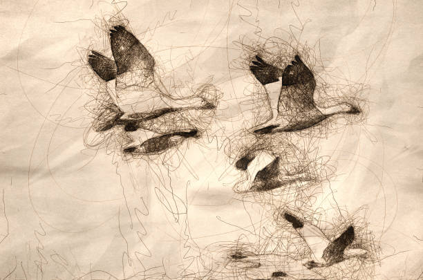 Sketch of a Flock of Snow Geese in Flight Sketch of a Flock of Snow Geese in Flight snow goose stock illustrations