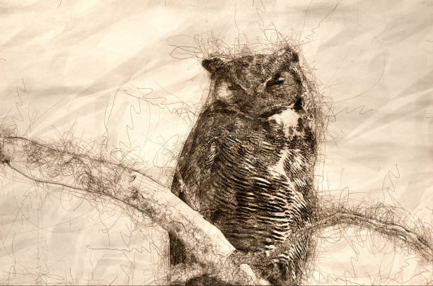 sketch of a great horned owl perched on a branch in a tree - great horned owl stock illustrations, clip art, cartoons, & icons