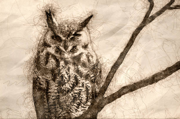 sketch of a great horned owl with an injured eye - great horned owl stock illustrations, clip art, cartoons, & icons