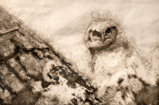 sketch of a young owlet making direct eye contact from its nest - great horned owl stock illustrations, clip art, cartoons, & icons