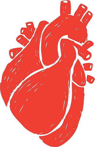 Best Human Heart Illustrations, Royalty-Free Vector ...