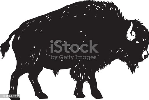 american buffalo done in a sketchy style