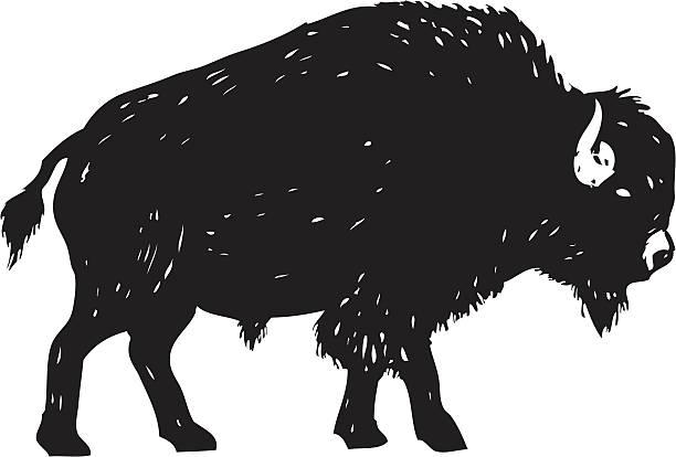 Best Buffalo Illustrations, Royalty-Free Vector Graphics ...