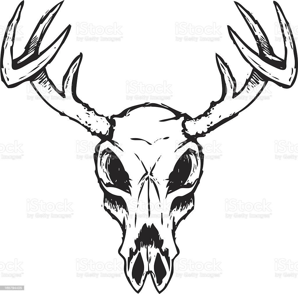 sketchy deer skull stock vector art more images of animal rh istockphoto com deer skull mount vector deer skull vector art