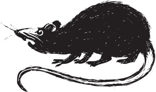 sketchy rat