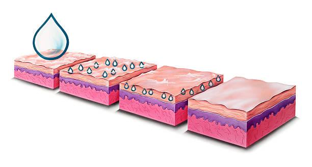 skin - moisturizing lotion absorption - dermatologist stock illustrations, clip art, cartoons, & icons