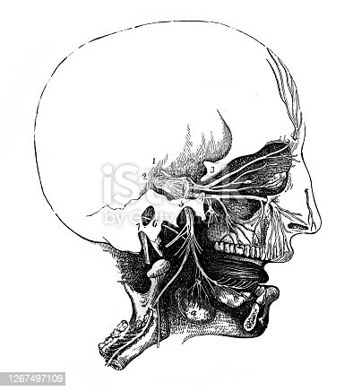 istock Skull and nasal cavity in the old book Human phisiology by H. Chapman, Philadelphia, 1887 1267497109