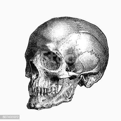 Engraving From 1898 Featuring A Human Skull