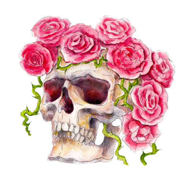 Skull with roses, Halloween watercolor illustration, isolated objects on white background. vector art illustration