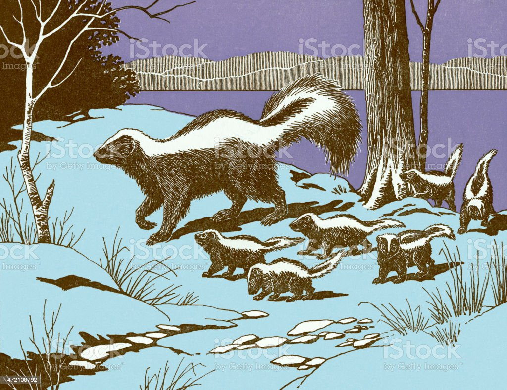 Skunks http://csaimages.com/images/istockprofile/csa_vector_dsp.jpg 2015 stock illustration