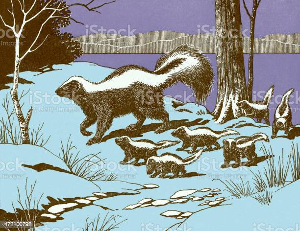 Skunks Stock Illustration - Download Image Now