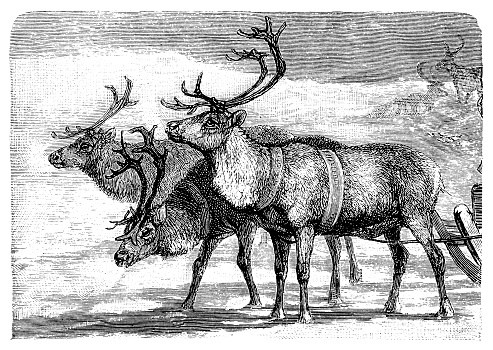 Sleigh pulled by reindeer
