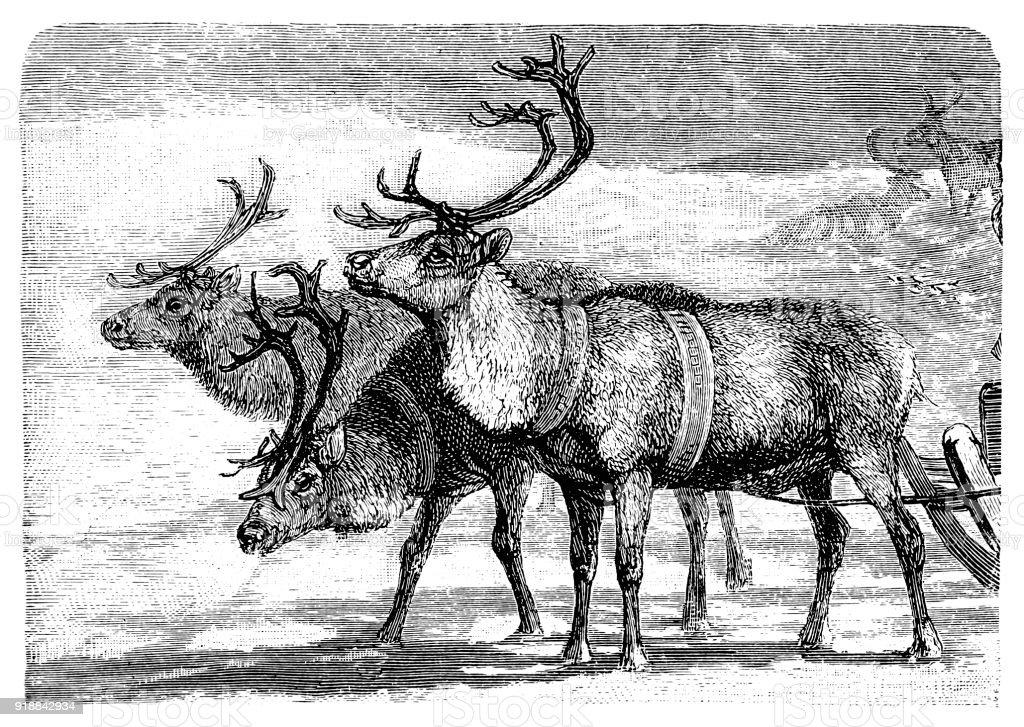 Sleigh pulled by reindeer vector art illustration