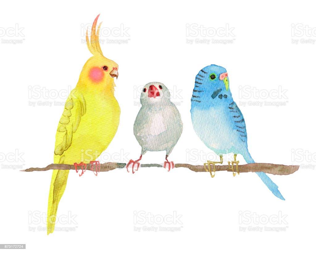 小さな鳥 すり寄せるのベクターアート素材や画像を多数ご用意 Istock