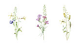 野生の花の小さな水彩花の花束